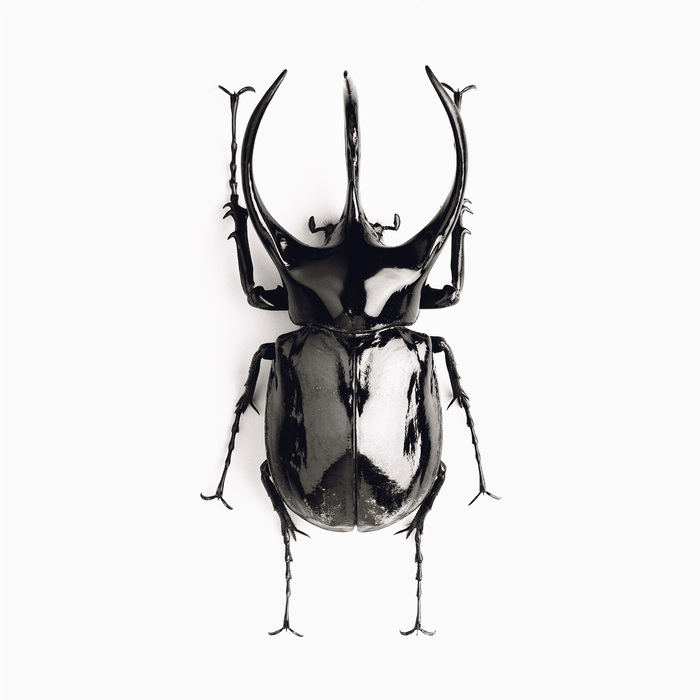 jean-baptiste huynh insectes scarabe noir